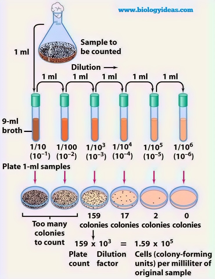 serial dilution technique in microbiology